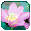 Lotus fondo animado icon