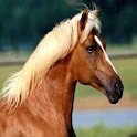 Horse Wallpapers HD icon