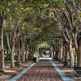 Through the trees by Carol Plummer - City,  Street & Park  City Parks ( charleston, path, trees, sc, waterfront park,  )
