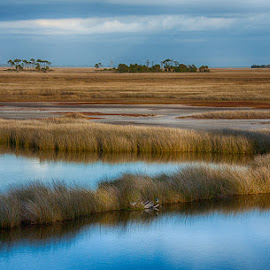 Florida Coastal Marshland by Brent Morris - Landscapes Waterscapes