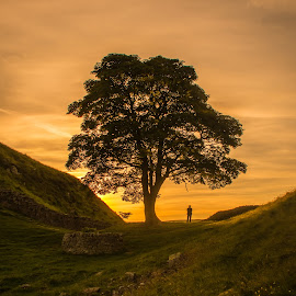 Robin Hood's Tree by Katerina Folprechtova - Novices Only Landscapes ( northumberland, tree, sunset, robin hood movie, hadrians wall )
