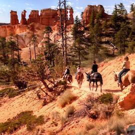 Kicking up Dust by Teresa Daines - Landscapes Mountains & Hills ( horseback, utah, bryce, red rocks, Earth, Light, Landscapes, Views,  )