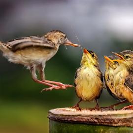 Landing Zone by MazLoy Husada - Animals Birds