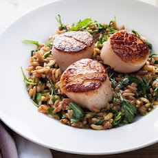 Seared Scallops with Lemony Farro and Arugula Salad Recipe