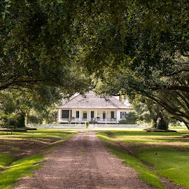 Southern Charm by Sheldon Anderson - Buildings & Architecture Homes ( charming, peaceful, louisiana, live oak trees, plantation )