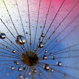 ... by Hale Yeşiloğlu - Nature Up Close Natural Waterdrops ( waterdrop, nature, drop, drops, waterdrops )