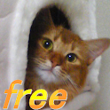 ネコの声(ソマリ)無料 icon