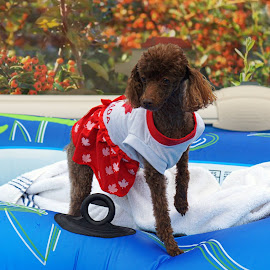 Love My Pool by Kathy Norrad-Barber - Novices Only Pets
