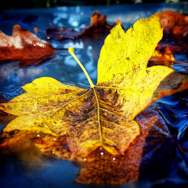 by Todd Reynolds - Instagram & Mobile Android ( leaf, fall, color, colorful, nature )