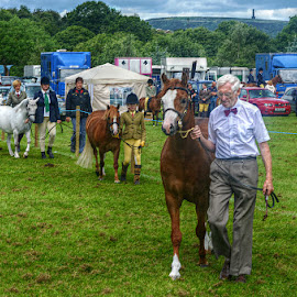 Bury Agricultural Show 2014  by Stephen Lodge - News & Events Entertainment ( field, horses, lancashire, automobile, horse, bury, show, people, agricultural )