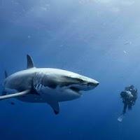 Screenshot of Sharks Live Wallpaper