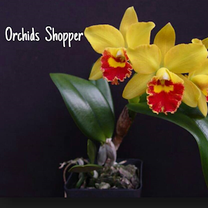 Orchids Shopper