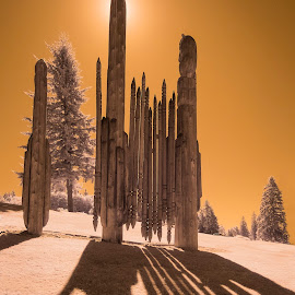 Totems on the hill by Eva Krejci - Landscapes Mountains & Hills ( hill, totems, infrared, trees, llight, shadows )
