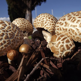 the whole bunch  by Sue Anderson - Nature Up Close Mushrooms & Fungi