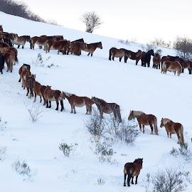by Antonio Cantabrana - Animals Horses