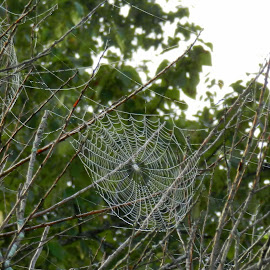EEEEEKKK, where's the critter?? by Gail Singer - Nature Up Close Webs