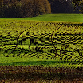 Fields by Don Fohler - Landscapes Prairies, Meadows & Fields ( nature, landscape detail, landscape )