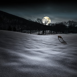 Deer Moon by Sergio Smiriglio - Digital Art Places ( peaceful, cold, deer moon, snow, mountainville, sergio smiriglio, snow crystals, salisbury mills, cornwall, moonlight, deer, sony a7, Lighting, moods, mood lighting )