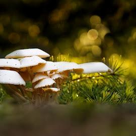 mushroom morning    by Rohan RM CF - Nature Up Close Mushrooms & Fungi ( refreshing, nature, green, morning, bokeh, mushrooms, renewal, trees, forests, natural, scenic, relaxing, meditation, the mood factory, mood, emotions, jade, revive, inspirational, earthly )