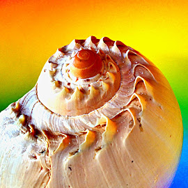 Seashell by Janette Ho - Artistic Objects Other Objects (  )