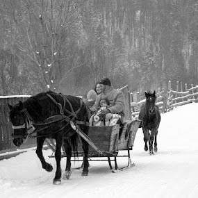 La galop cu Iarna by Kati Raileanu - Landscapes Travel