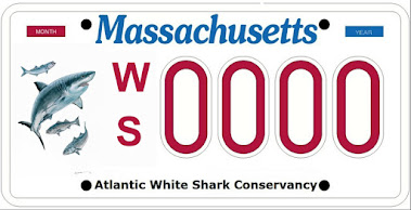 Atlantic White Shark Conservancy license plate