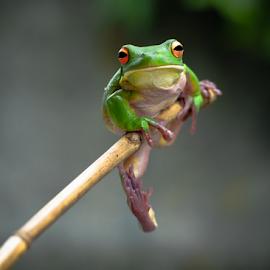 by Robert Cinega - Animals Amphibians