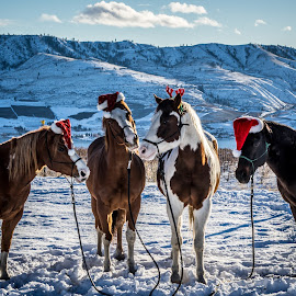 Christmas Card 2014 by Austin Boyce - Animals Horses ( winter, equine, snow, horse, christmas )