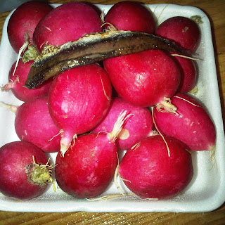 Roasted Radishes Bathed in Anchovy