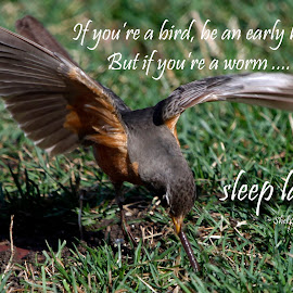 Early Bird by Lorri Nussbaum - Typography Quotes & Sentences ( bird, robin, quote, wings, capture, early bird, spring, shel silverstein, early )