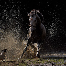 Horses vs Dog by Rishie Bhatoe - Animals Horses
