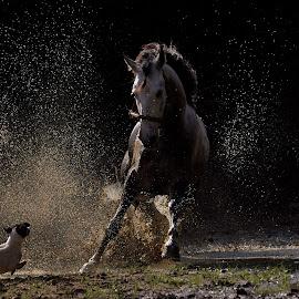 Horses vs Dog by Rishie Bhatoe - Animals Horses