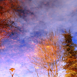 Water reflection by Alami Alami - Nature Up Close Trees & Bushes ( water, reflection, nikon,  )