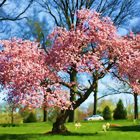 Nature's Artwork by Linda Antenucci - Flowers Tree Blossoms