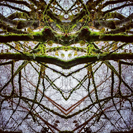 by Todd Reynolds - Instagram & Mobile Android ( spider, mirrored, toddreynoldsphotography )