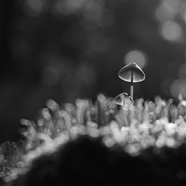 by Stefan Lundgren - Nature Up Close Mushrooms & Fungi ( bransbodalen, närbilder )