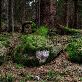 fairytale forrest 2 by Dirk Rosin - Landscapes Forests ( skog, challenge, forrest, wald, norway,  )
