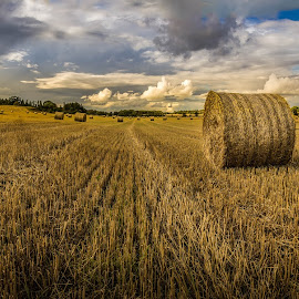 La récolte by Shooting Wild - Landscapes Prairies, Meadows & Fields ( wheat, field, canon, countryside, sweden, 60d, haystack )