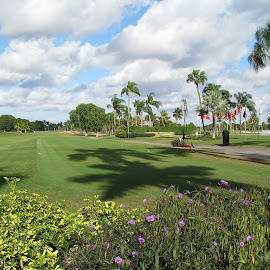 Doral Golf Club, Miami, FL. by Casey Meyer - Sports & Fitness Golf ( east coast, golfing, florida, doral, club, miami, 2011, golf, resort, flowers )