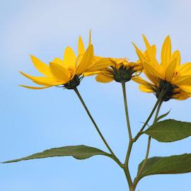 Bonheur by Nicole Samson-Savoury - Novices Only Flowers & Plants