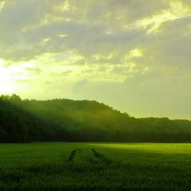 Morning  by Barak Johnson - Landscapes Mountains & Hills ( hills, sunrise, landscape )