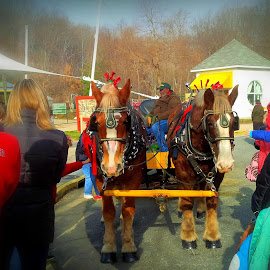 Horse Drawn Hayride in a City Park by Cecilia Sterling - News & Events Entertainment ( horse drawn hayride, virginia, media attention, lake accotink park, city park, draft horse,  )