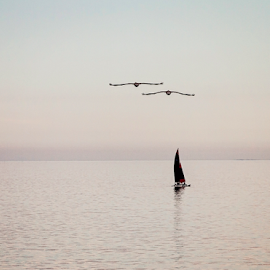 Lazy Afternoon by Cheryl Nestico - Transportation Other ( flying, reflection, red, sailing, oceanscape, mexico, silver, rocky point, seascape, sailboat, birds, black )