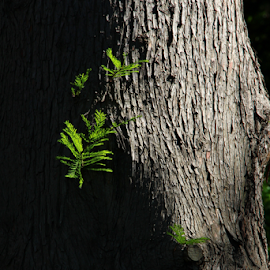 Emerald in Shadow by Angelia Viley - Nature Up Close Trees & Bushes ( trunk, tree, shadow, summer, branch, leaves, sunlight )
