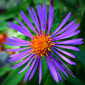 Purple Flower by Steve Friedman - Flowers Single Flower ( purple, flower,  )
