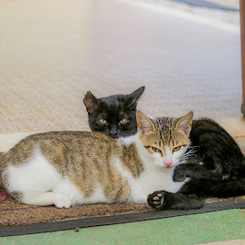 by Alberto Molinari - Animals - Cats Kittens