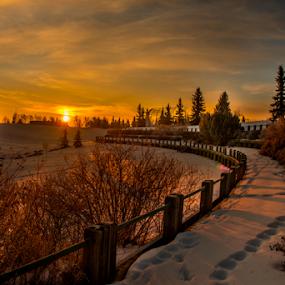 Millwood City Park by Joseph Law - City,  Street & Park  City Parks ( morning walk, millwood, sun shine, pathway, bushes, beautiful day, snow, trees, edmonton, city park )