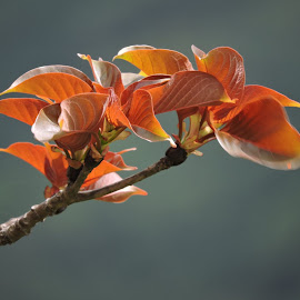 by Vaibhav Chavan - Nature Up Close Other plants