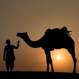 Nomadic Sunset by Nicholas Hill - Landscapes Travel ( camel, silhouette, sunset, trader, nomad )