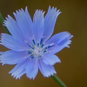 Blue flower by Janice Poole - Flowers Single Flower ( macro, blue, flower,  )